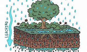 Illustration of water moving through vegetation and into and through the soil and rock.