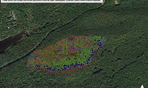 Trees within the Shale Hills focus catchment have all been catalogued. Different colors show different species.