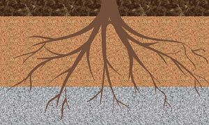 Illustration of tree roots growing downward through layers in the soil.