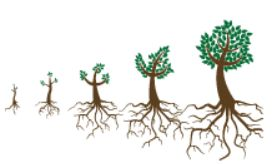 Illustration of five stages of tree and root growth. Larger trees have increased density of roots.